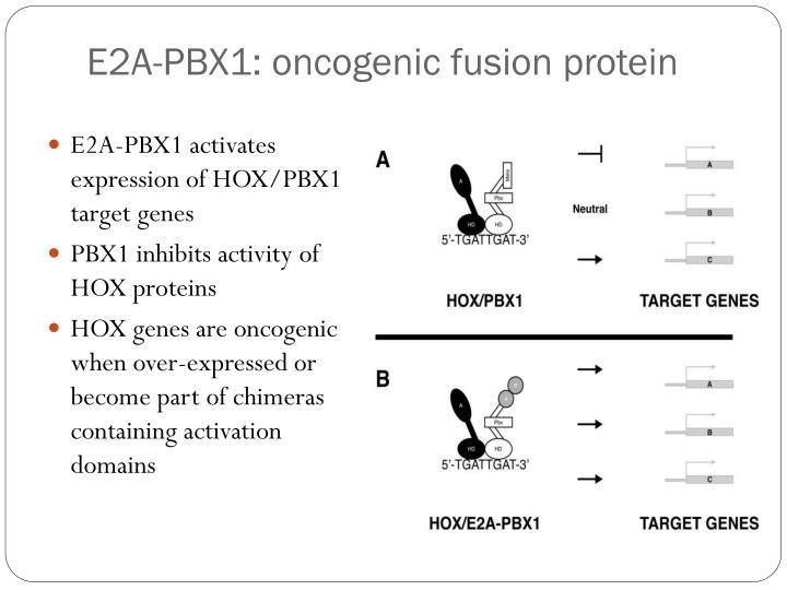 E2A-PBX1: