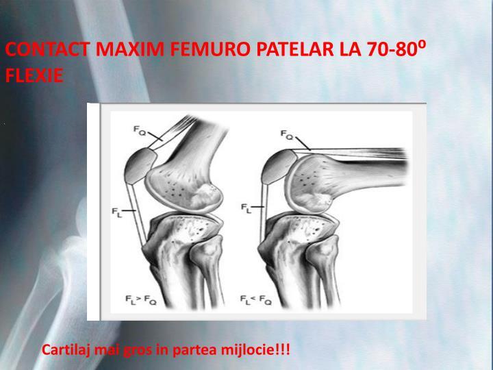 CONTACT MAXIM FEMURO PATELAR LA 70-80⁰ FLEXIE