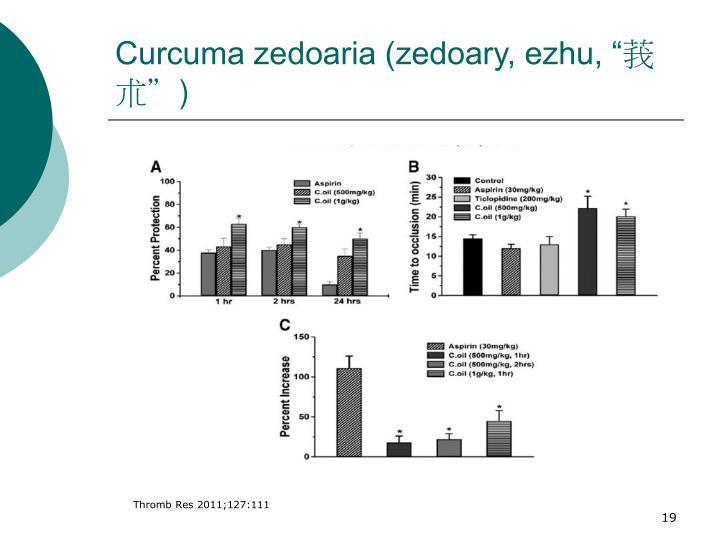 """Curcuma zedoaria (zedoary, ezhu, """""""