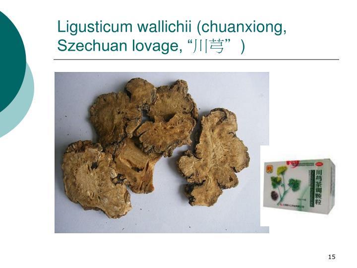 """Ligusticum wallichii (chuanxiong, Szechuan lovage, """""""