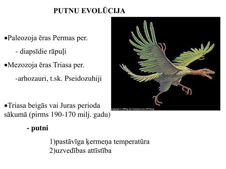 PUTNU EVOLŪCIJA