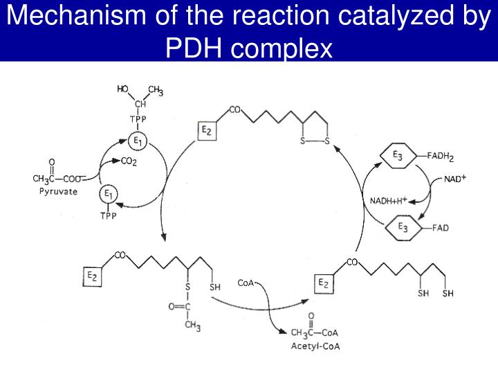 Mechanism of the reaction catalyzed by PDH complex