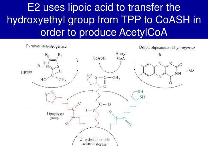 E2 uses lipoic acid to transfer the hydroxyethyl group from TPP to CoASH in order to produce AcetylCoA