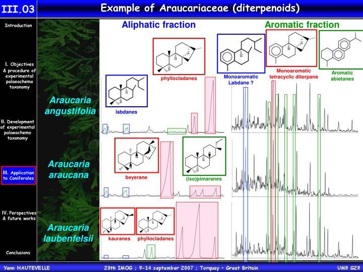 Example of Araucariaceae (diterpenoids)