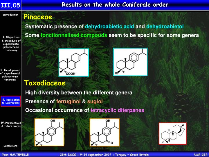 Results on the whole Coniferale order