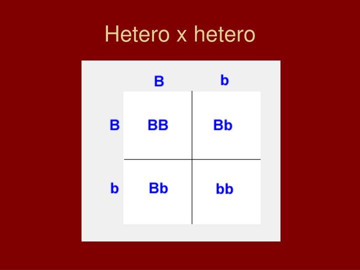 Hetero x hetero