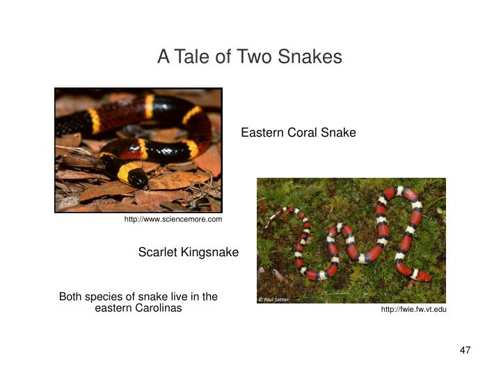 A Tale of Two Snakes