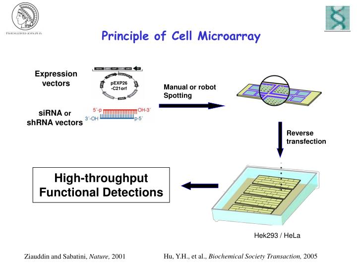 Principle of Cell Microarray