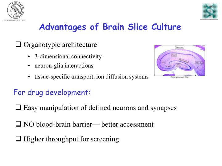 Advantages of Brain Slice Culture