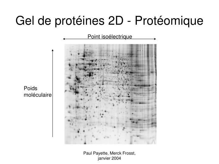 Gel de protéines 2D - Protéomique