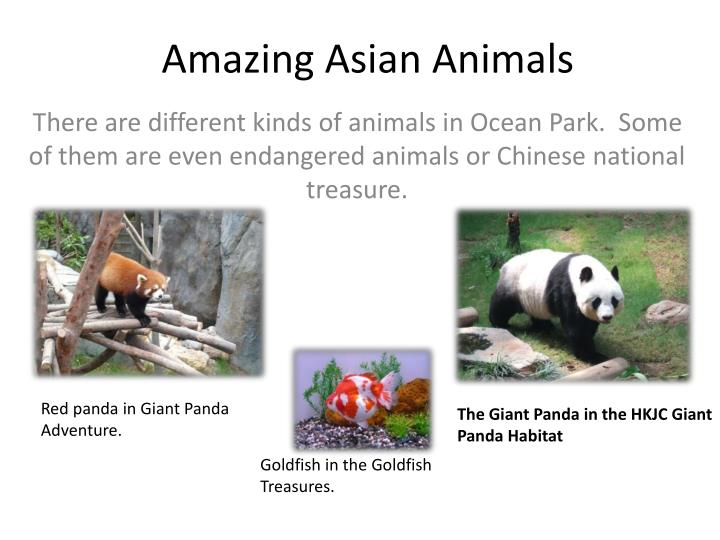 Amazing Asian Animals