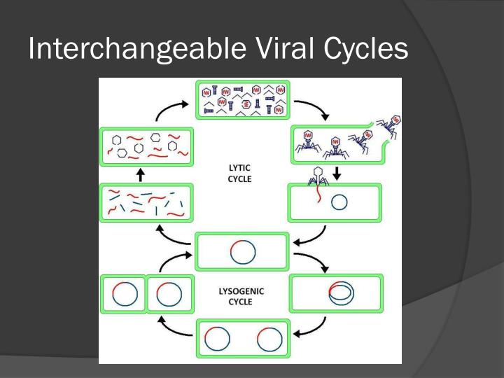 Interchangeable Viral Cycles