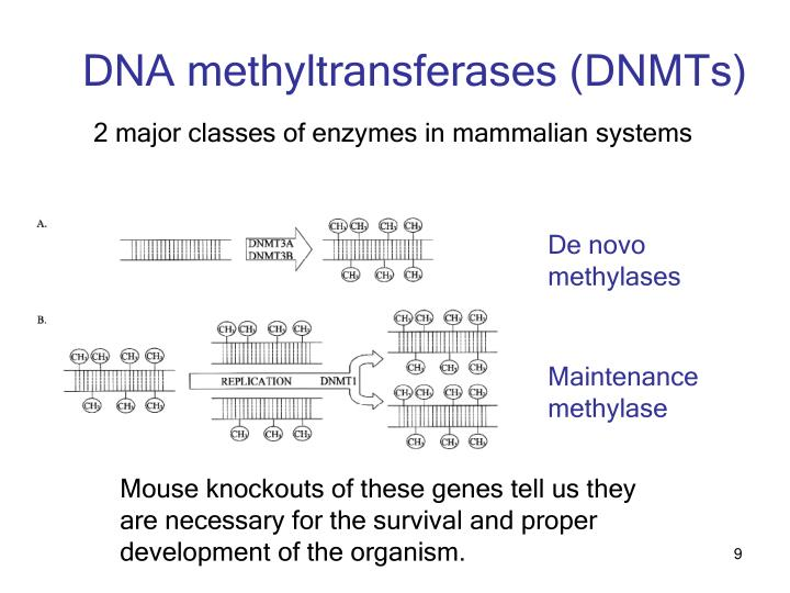 DNA methyltransferases (DNMTs)