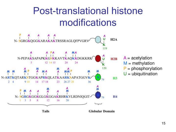 Post-translational histone modifications