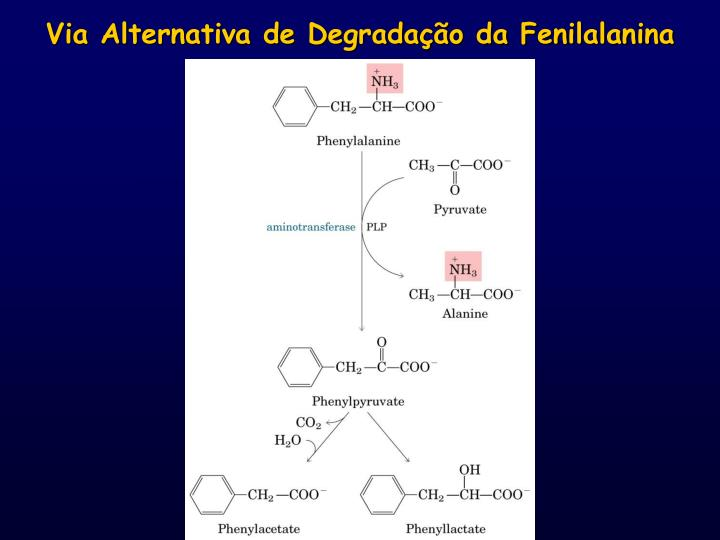 Via Alternativa de Degradação da Fenilalanina