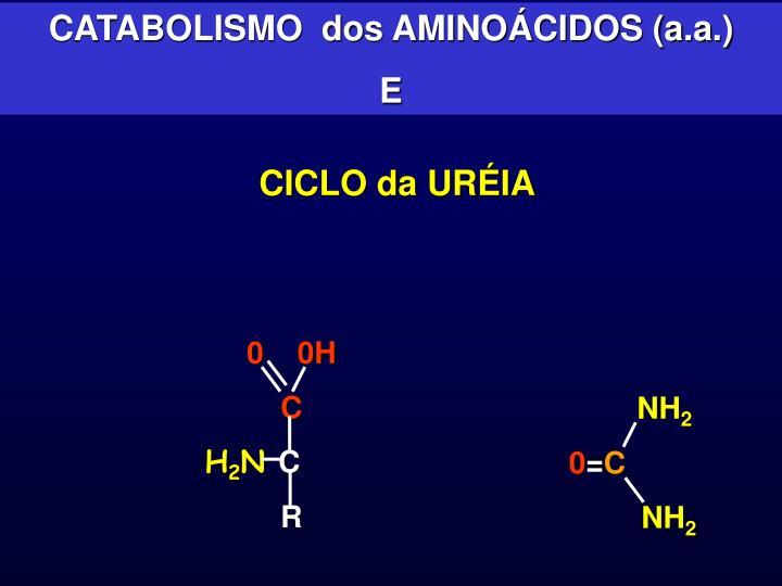 CATABOLISMO  dos AMINOÁCIDOS (a.a.)