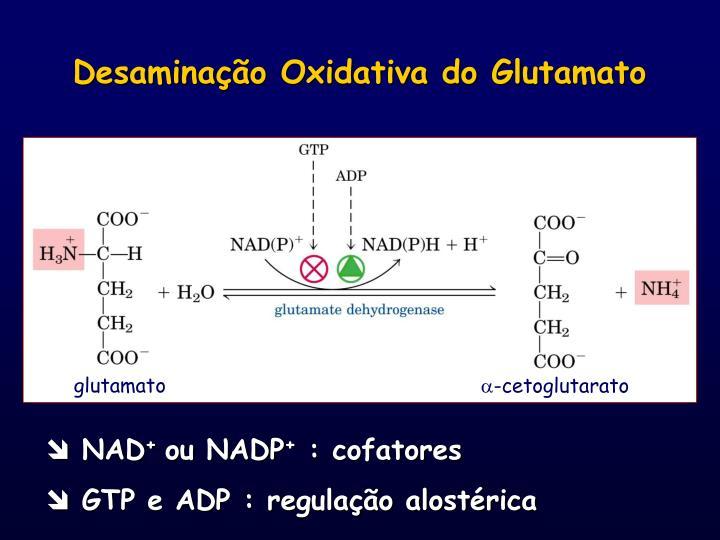 Desaminação Oxidativa do Glutamato