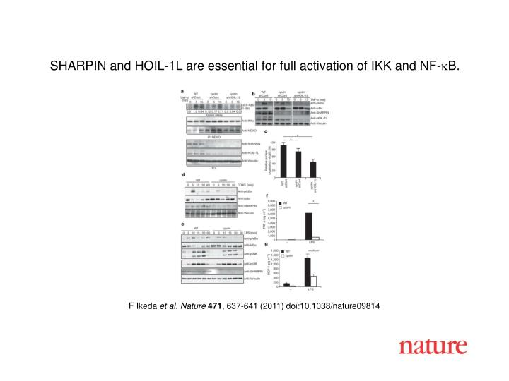 SHARPIN and HOIL-1L are essential for full activation of IKK and NF-