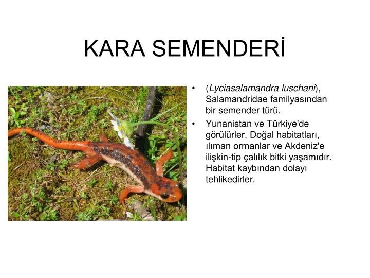 KARA SEMENDERİ