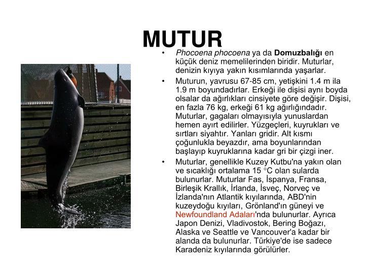 MUTUR