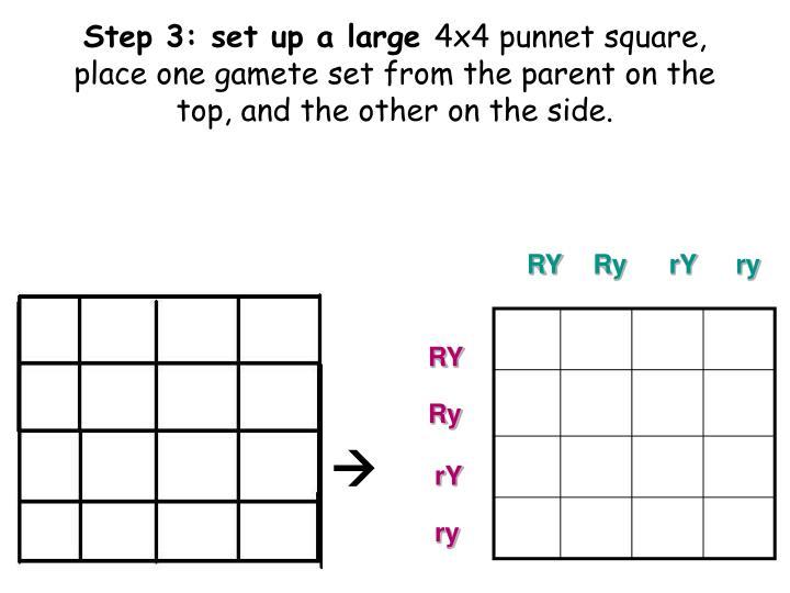 4x4 4x4 punnett square. Black Bedroom Furniture Sets. Home Design Ideas