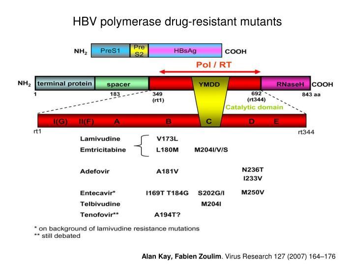 HBV polymerase drug-resistant mutants