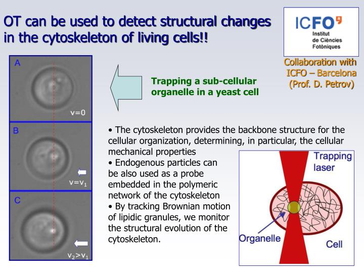 OT can be used to detect structural changes
