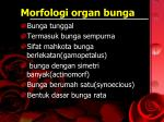 morfologi organ bunga