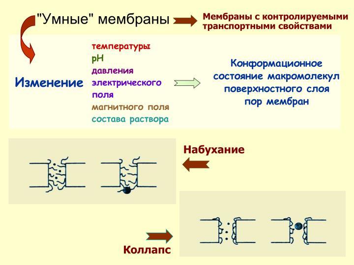 Мембраны с контролируемыми транспортными свойствами