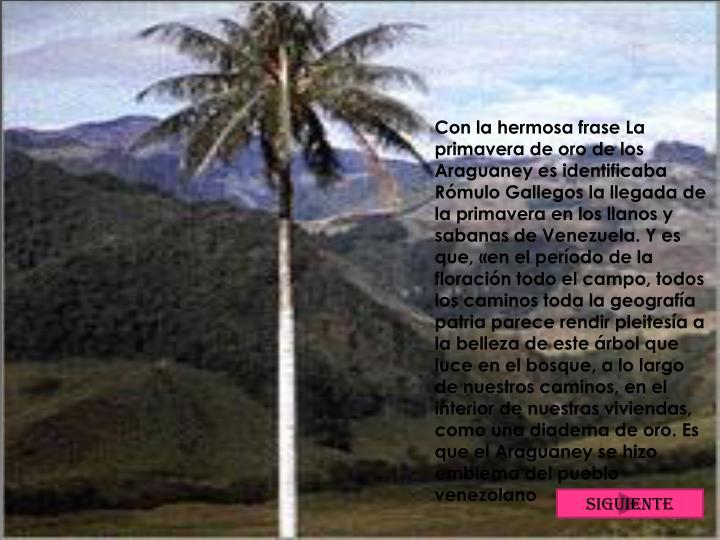 Con la hermosa frase La primavera de oro de los Araguaney es identificaba Rómulo Gallegos la llegada de la primavera en los llanos y sabanas de Venezuela. Y es que, «en el período de la floración todo el campo, todos los caminos toda la geografía patria parece rendir pleitesía a la belleza de este árbol que luce en el bosque, a lo largo de nuestros caminos, en el interior de nuestras viviendas, como una diadema de oro. Es que el Araguaney se hizo emblema del pueblo venezolano