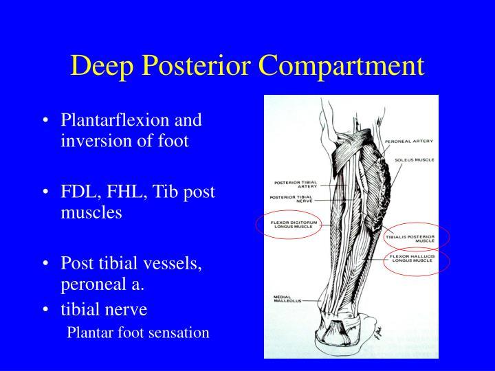 Deep Posterior Compartment