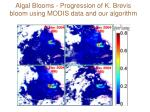 algal blooms progression of k brevis bloom using modis data and our algorithm