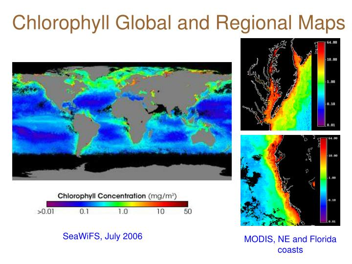 Chlorophyll Global and Regional Maps