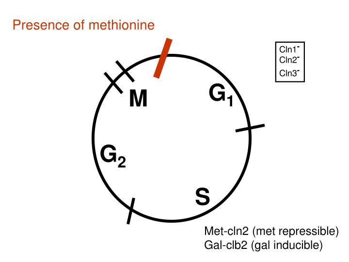 Presence of methionine