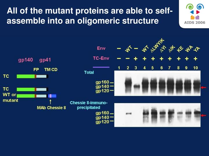All of the mutant proteins are able to self-assemble into an oligomeric structure