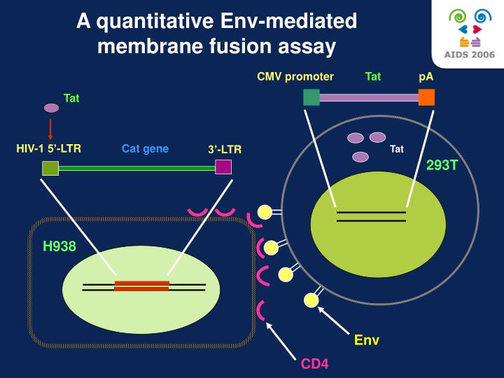 A quantitative Env-mediated membrane fusion assay