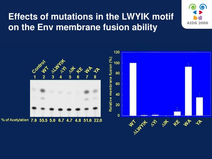 Effects of mutations in the LWYIK motif