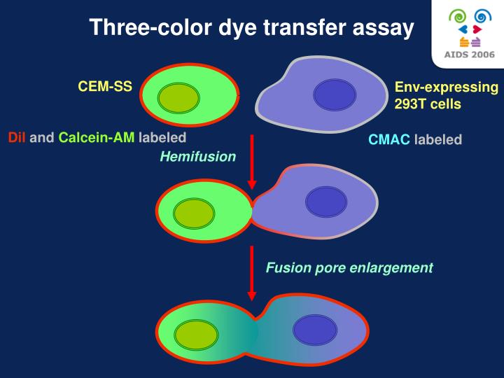Three-color dye transfer assay