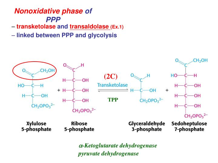 Nonoxidative phase