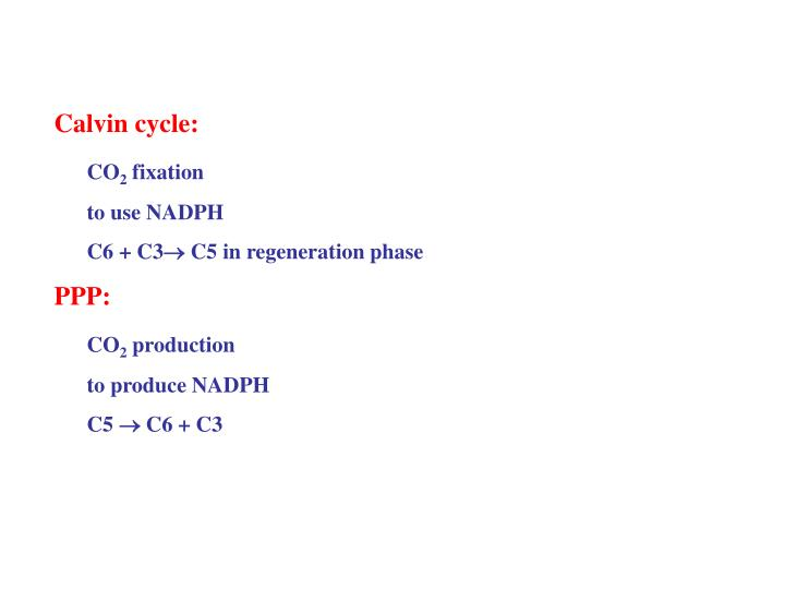 Calvin cycle: