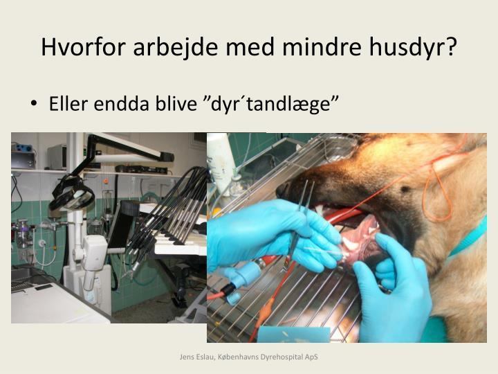 Hvorfor arbejde med mindre husdyr?