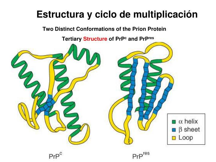 Estructura y ciclo de multiplicación