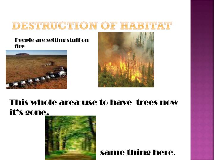 Destruction of habitat