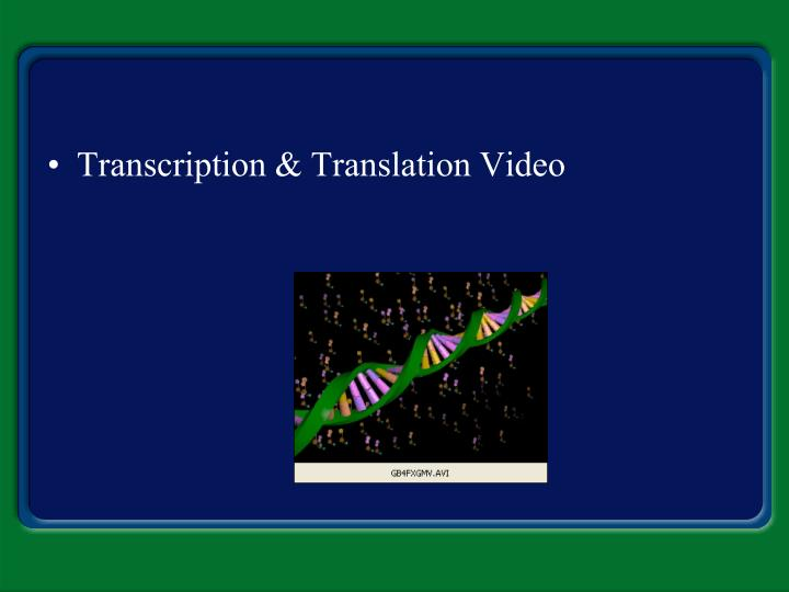 Transcription & Translation Video