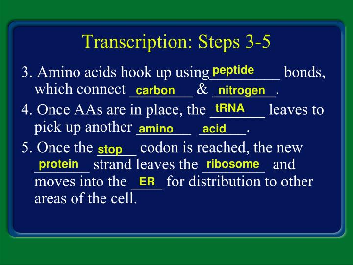 Transcription: Steps 3-5