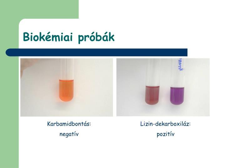 Biokémiai próbák