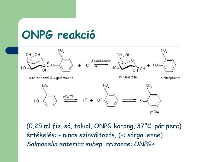 ONPG reakció