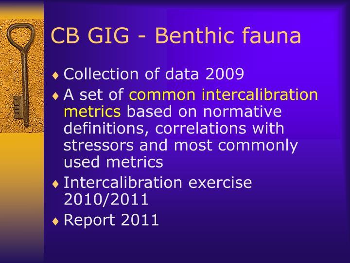 CB GIG - Benthic fauna