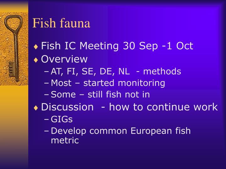 Fish fauna