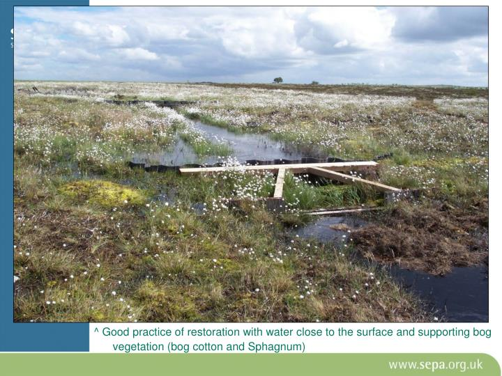 ^ Good practice of restoration with water close to the surface and supporting bog vegetation (bog cotton and Sphagnum)